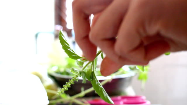 Picking basil leaf for cook video