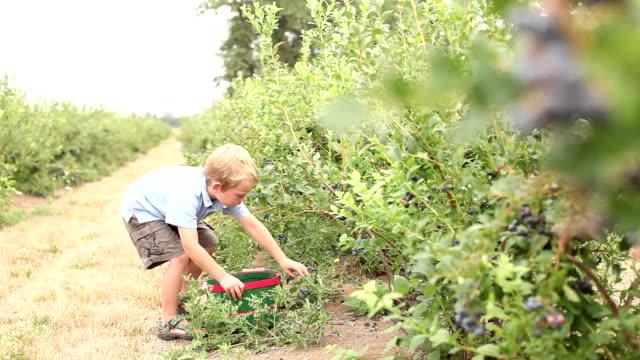 Picking berries video