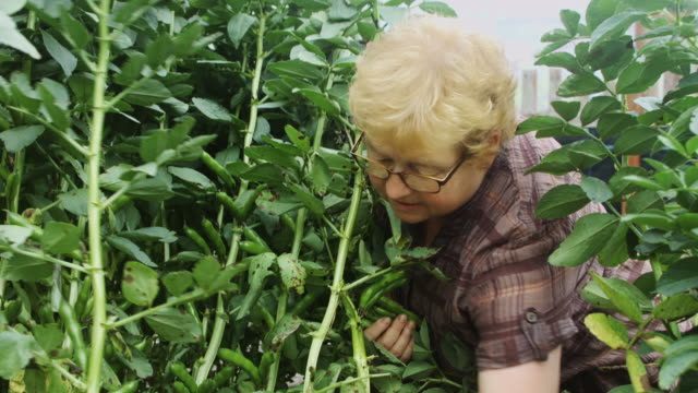 Picking Broad Beans video
