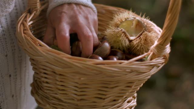 Picking chestnut video