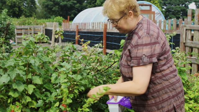 Picking Fruit in Sunny Allotment video