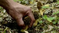 Picking Morel Mushroom video