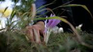 Picking wild flower video