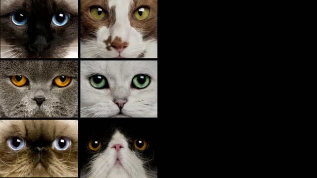 Pictures composition of cats video