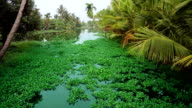 Picturesque scene in Kerala Backwaters video