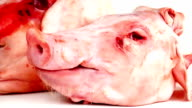 Pig Heads On White video