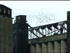 Pigeon flocks on rusty grain elevators video