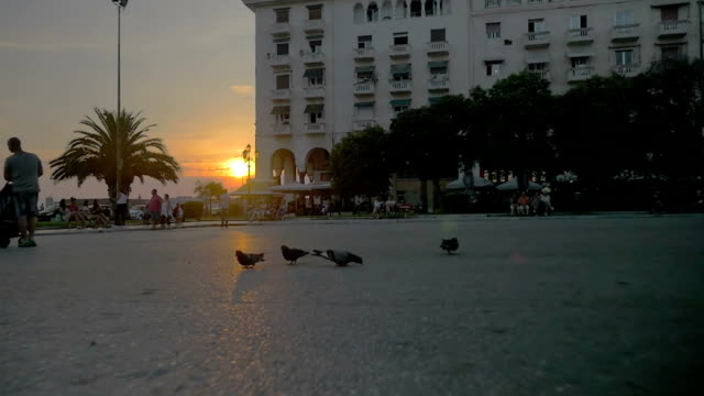Pigeons flying away in the city at sunset video