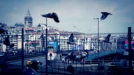 Pigeons in Istanbul video