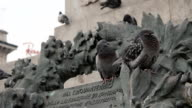 Pigeons in the Milan Cathedral square video