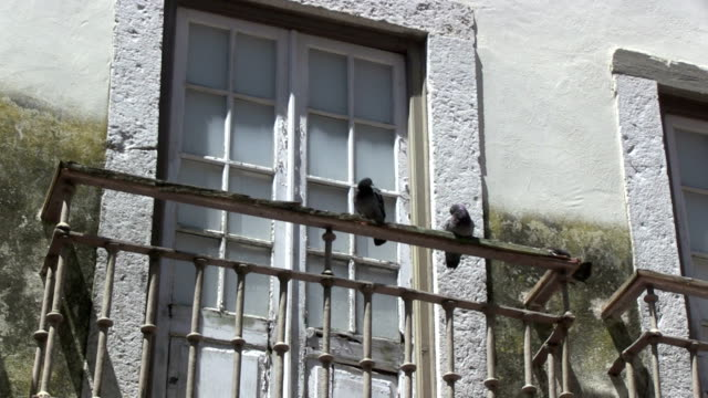 Pigeons on balcony video
