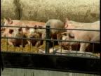 Pigs on the farm (Original PAL) video