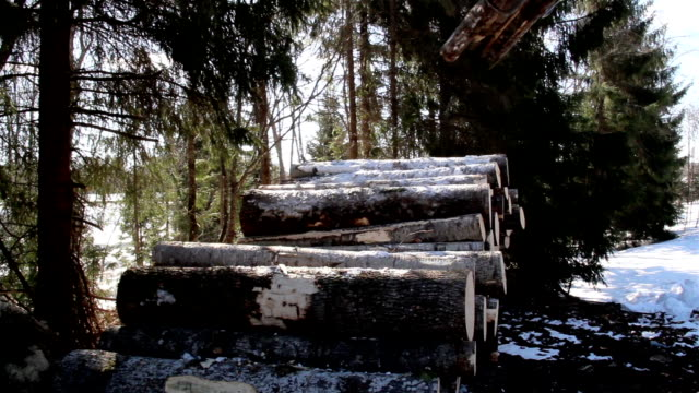Piled logs on the ground are slowly increasing video