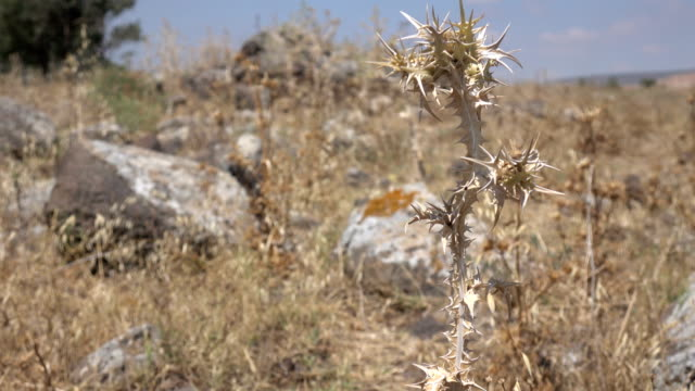 Piles of Stones Among Thistles in Israel video