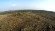 Pine forest after storm. Forest characteristic for pine forests of northern countries. Fallen trees, storm damage. Windfall. video
