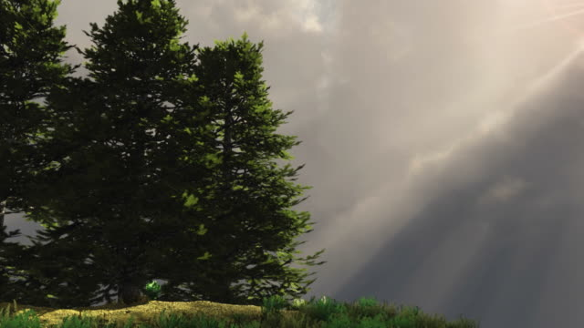 Pine trees on a hill with rays of light video