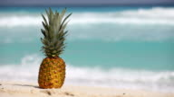 Pineapple fruit on sand against turquoise caribbean sea water video