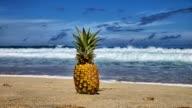 Pineapple Timelapse in Hawaii video