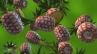Pineapples Falling - Slow Motion video