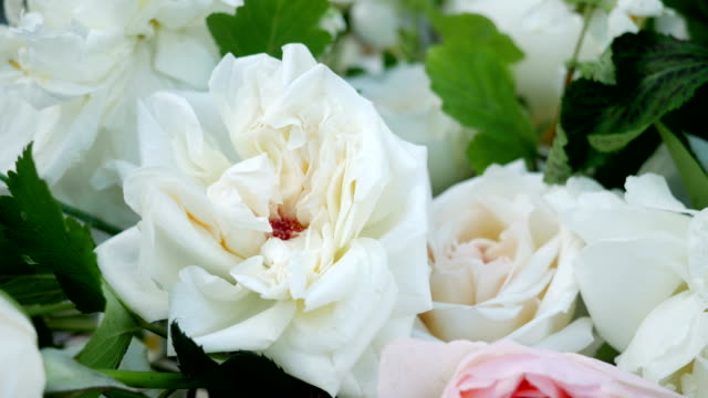 pink and white peony roses video