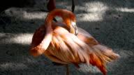 Pink Flamingo video