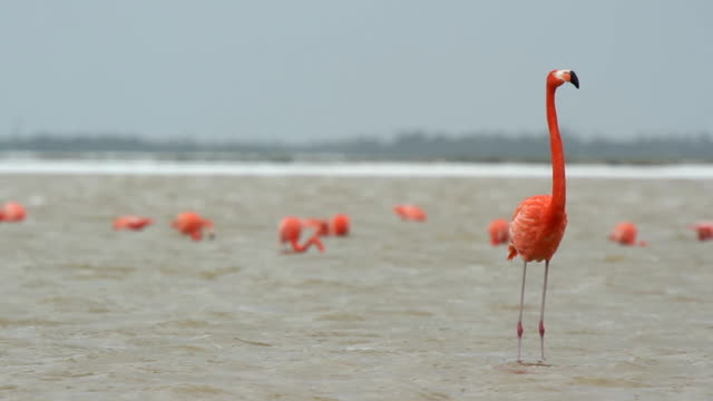 pink flamingos video