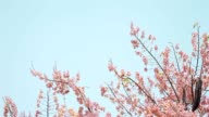 Pink flower and blue sky with vintage picture style video