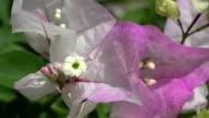 Pink Flower Closeup in Wind video