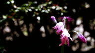 Pink flower in botanic garden video