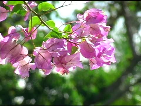 Pink Flowers 1 video