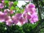 Pink Flowers 2 video
