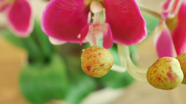 pink orchid decorate in living room video