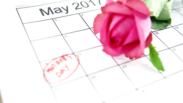 Pink rose on calendar video