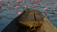 Pink water lily in the lake video