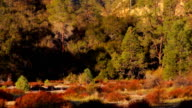 Pinnacles National Park Rock Formations California United States video