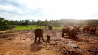 Pinnawela Elephant Orphanage video