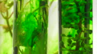pipette depositing drops of green dye in test tubes video