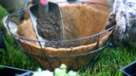 Place Dirt in Hanging Basket video