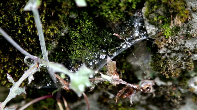 Plant and spider web in the middle of moss on stone video