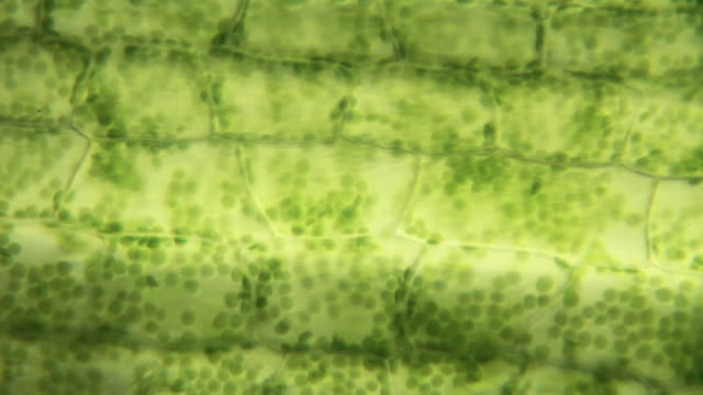 Plant cells video