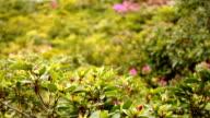 Plant (HD) video