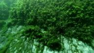 Plant video