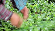 Plantation workers video