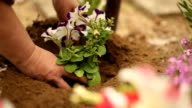 planting a new flower, gardening video