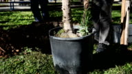 SERIES: Planting a tree video