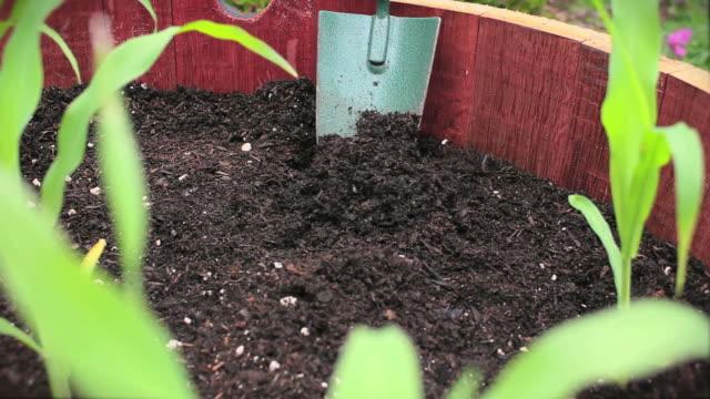 Planting Corn V.3 (HD) video