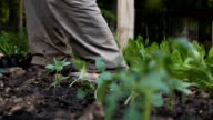 Planting in the garden video