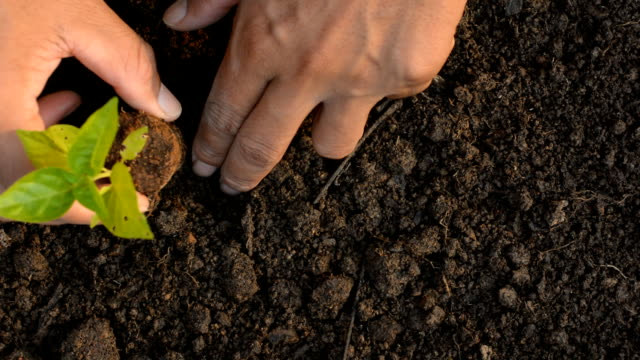 planting, sprout, gardening video