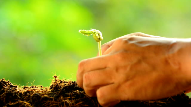planting, sprout video
