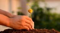 planting tree sprout video